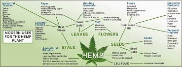 hemp oil cure for skin cancer