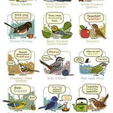 Topatoco Because Birds