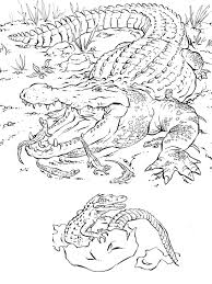 Small Picture Crocodile Animal Coloring Pages Crocodiles In A Swamp Page Free