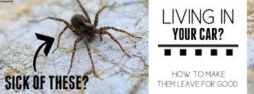 how to kill spiders in house. How To Kill Spiders In House Images Black Widow
