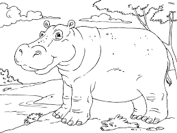 Colouring Pages Hippo Coloring Pages In
