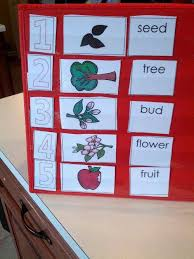 Apple Tree Pocket Chart New Apple Life Cycle Packet And Free Printable Apple Life