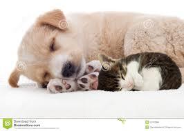 puppies and kittens sleeping. Beautiful Puppies Puppy And Kitten Sleeping Throughout Puppies And Kittens Sleeping O