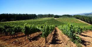 Resultado de imagen de viñas el bierzo