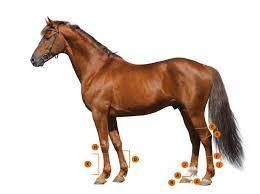 horse sizing charts