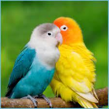LOVE BIRDS HD WALLPAPERS - Wallpaper ...