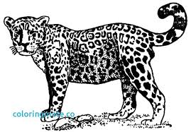 Jaguar Animal Coloring Pages At Getdrawingscom Free For Personal