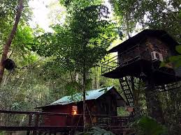 Treehouse Accommodation At Khao Sok Thailand With Limestone Lake TourKhao Sok Treehouse