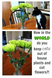 A few different tips and tricks for keeping cats away from precious house  plants and flowers