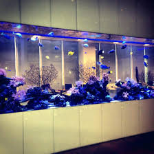 office fish tanks. Bloomberg Fish Tank Lp New York Ny Fishbowl Office For Aquarium Vastu Tanks