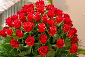 Beautiful Rose Flower Wallpaper 3d ...