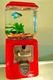 small screenshot 1 office fish. gum ball machine fish tank remove the top of and twist small screenshot 1 office