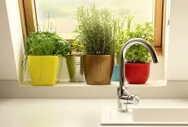 Kitchen Scrap Gardening Grow A Garden Anywhere Paleo Plan