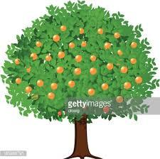 A Cartoon Orange Tree Bearing Fruit Vector Art  Getty ImagesTree Bearing Fruit