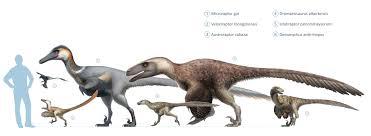 Dinosaur Sizes Comparison Chart Artstation Raptor Squad Size Chart Wikipedia Fred Wierum