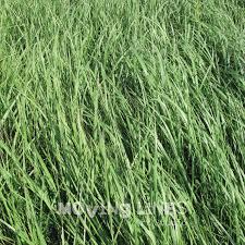 summer outdoors wallpaper. Digital Backdrop Nature Photo Wallpaper Hay Grass By MovingLines Summer Outdoors O