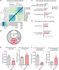 Knockdown Factor Chart Long Noncoding Rna Neat1 Mediates Neuronal Histone