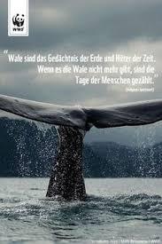 Die 142 Besten Bilder Von Zitate Quotes In 2018 Deutsch Sonntag