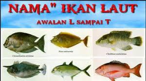 Nama Nama Ikan Laut Beserta Gambarnya
