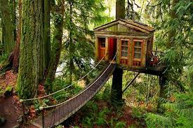 You Can Rent a Sweet Tree House On Airbnb!?