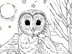 owl pictures to colour in. Brilliant Owl Barn Owl In The Farmyard Colouring Page With Pictures To Colour In T