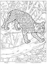 Small Picture Jungle Animals Colouring Pages Animal Coloring Pages for Kids