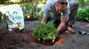 how to plant garden. How To Plant A Shrub Garden