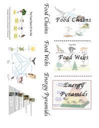 food web pyramid food chain food web energy pyramid foldable by lisa falco tpt