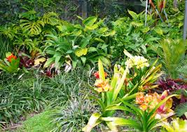 Small Picture Sub Tropical Garden Design Ideas izvipicom