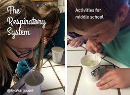 the respiratory system activities for middle evavarga net science biology stem
