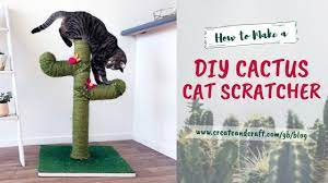 cactus diy cat scratching post your cat