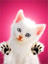 صور لقطط ثابتة ومتحركة Images?q=tbn:ANd9GcQj-BHbhju6302kqxEF_CGGiACxKA3ZE9I8aq0MGQUYhse6PO7x