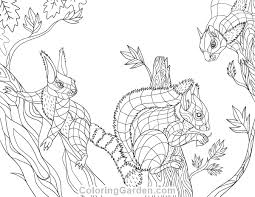 Squirrel Adult Coloring Page