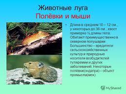 Презентация на тему Луг природное сообщество На лугу может  19 Животные луга