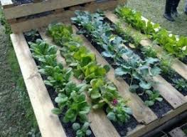 wooden pallets uses. pallet-garden-300x219 wooden pallets uses