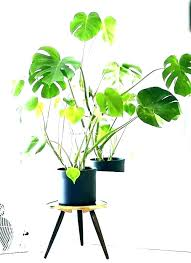 common indoor house plants names best tall for large tropical cool unique where common indoor house plants