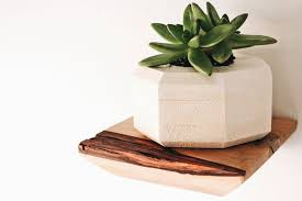 beautiful wooden shelves with live edge perfect for succulents