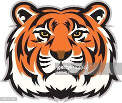 tiger face clipart 1 566 198 clip arts