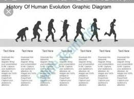 Evolution Of Man Chart Prepare A Flow Chart Showing Evolution Of Man Through Ages