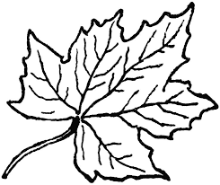 Small Picture 25 unique Maple leaf clipart ideas on Pinterest Maple leaf