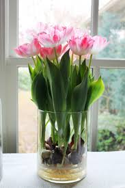 how to grow tulips and other perennials in glass jars in your home all year hubpages