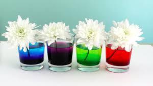 Como Te Ir Flores Naturales Con Colorante De Comida Experimento