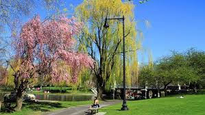 boston public garden green en vogue