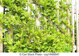 Supporting Climbing Plants ProperlyClimbing Plants For Fence