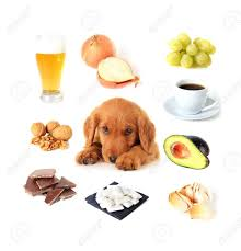 Foods Dogs Should Not Eat Chart Chart Of Toxic Foods For Dogs