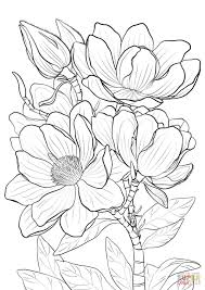 Campbells Magnolia Coloring Page From Magnolia