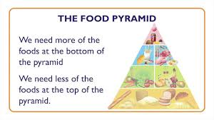 fish nutritional value and food pyramid something fishy kids lesson 7 you