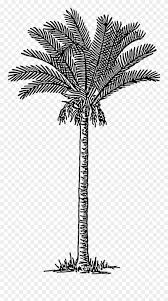 Date Palm Free Vintage Palm Tree Illustration Clipart 986780