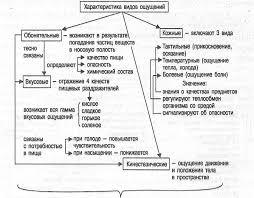 Ощущение и восприятие pro psixology ru Рис 3 3 Другие виды ощущений