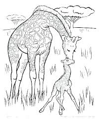 Coloring Pages Of Elephants And Giraffes Coloring Pages Of Elephants